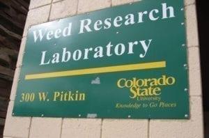 Marijuana Research At Colorado State University
