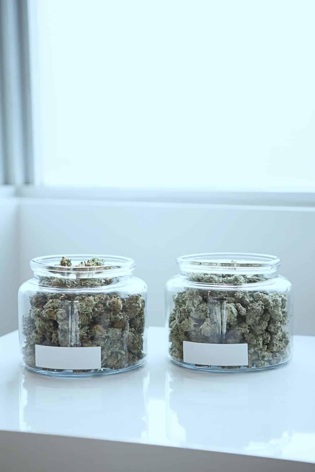 weed cannabis marijuana strain