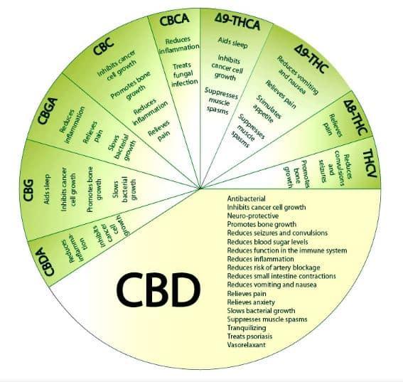 cannabinoid cbd thc benefit