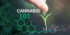 Learn more about Cannabis