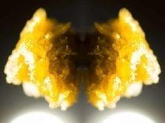 wax cannabis