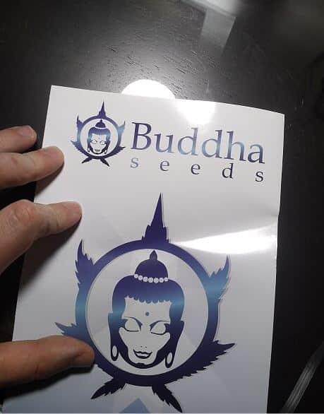 buddha seeds bank autoflowering cannabis spain