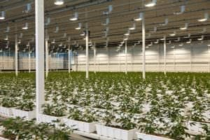 Aurora Cannabis Canadian facility
